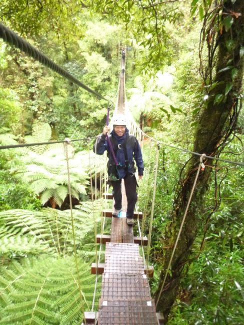 Rotorua canopy